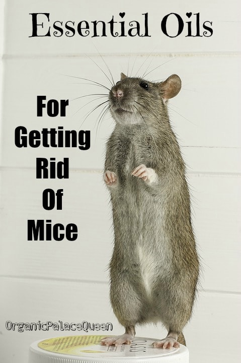 essential oils to get rid of mice