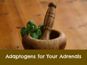 Adaptogens adrenal fatigue