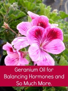 Plant Therapy geranium essential oil