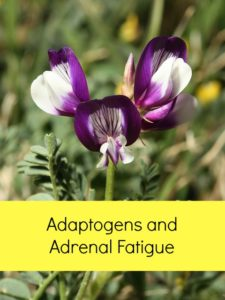 adaptogens and adrenal fatigue