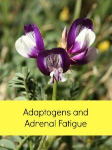 adaptogens and adrenal fatigue