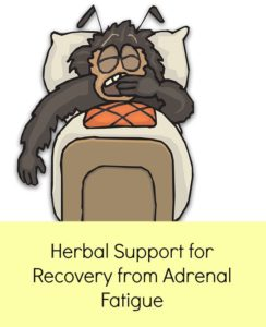 high quality adrenal gland supplements