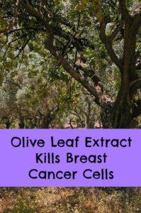 olive leaf for breast cancer