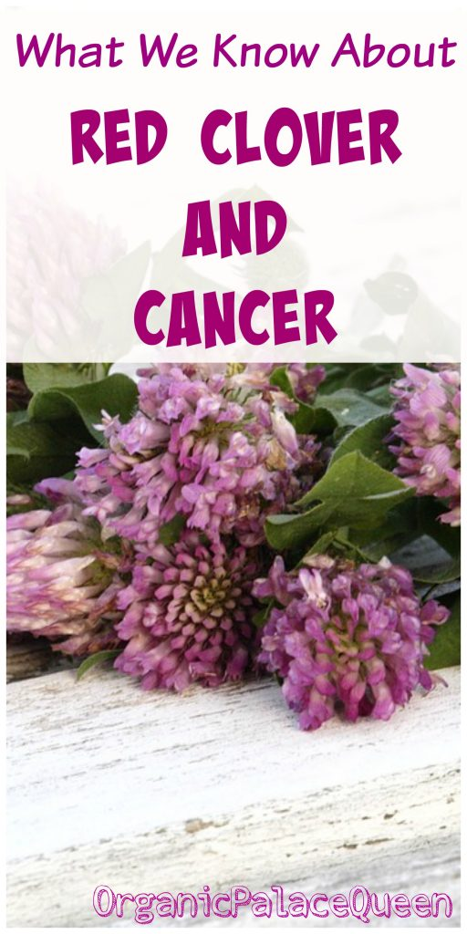 Red clover and cancer