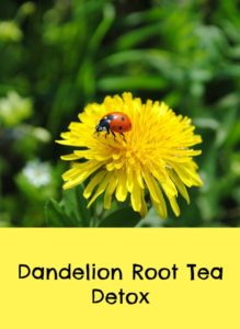 Where can I buy dandelion tea bags