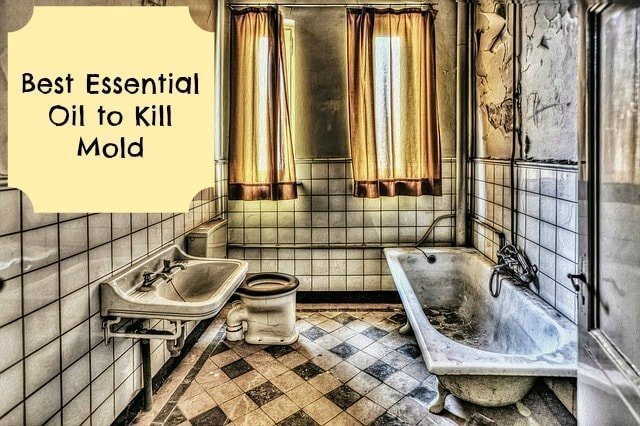 best essential oil to kill mold