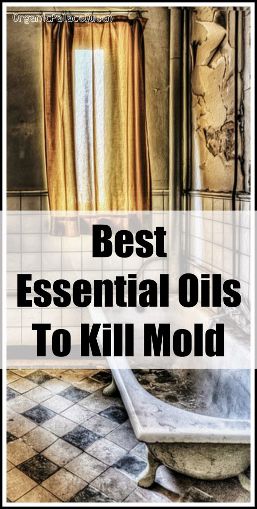 best essential oils to kill mold