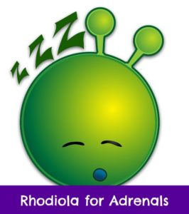 rhodiola for adrenals