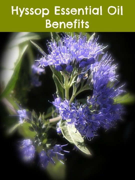 Hyssop essential oil benefits