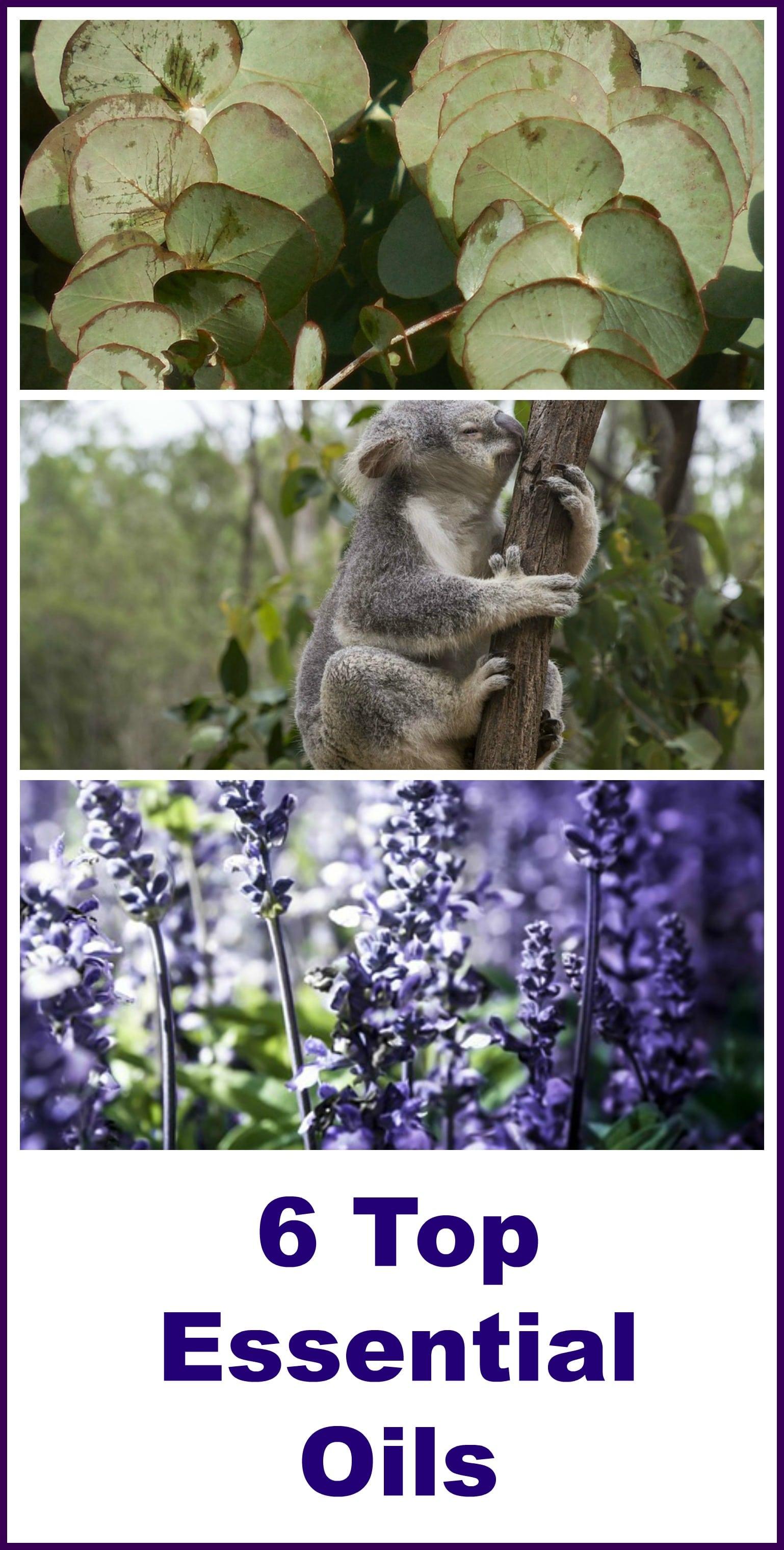 Edens Garden Essential Oils Sets - Organic Palace Queen