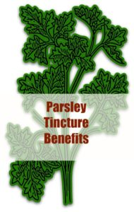 parsley tincture benefits
