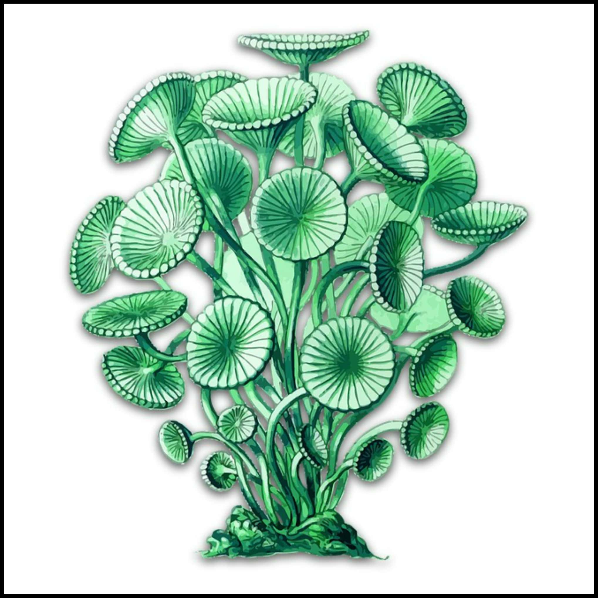 spirulina for fibromyalgia