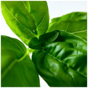 sweet basil essential oil benefits