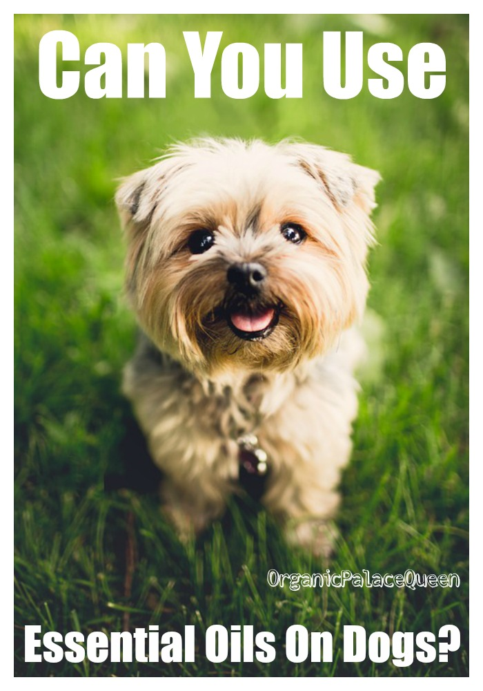 Essential oil remedy for fleas on dogs
