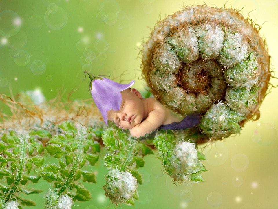 essential oils to break insomnia