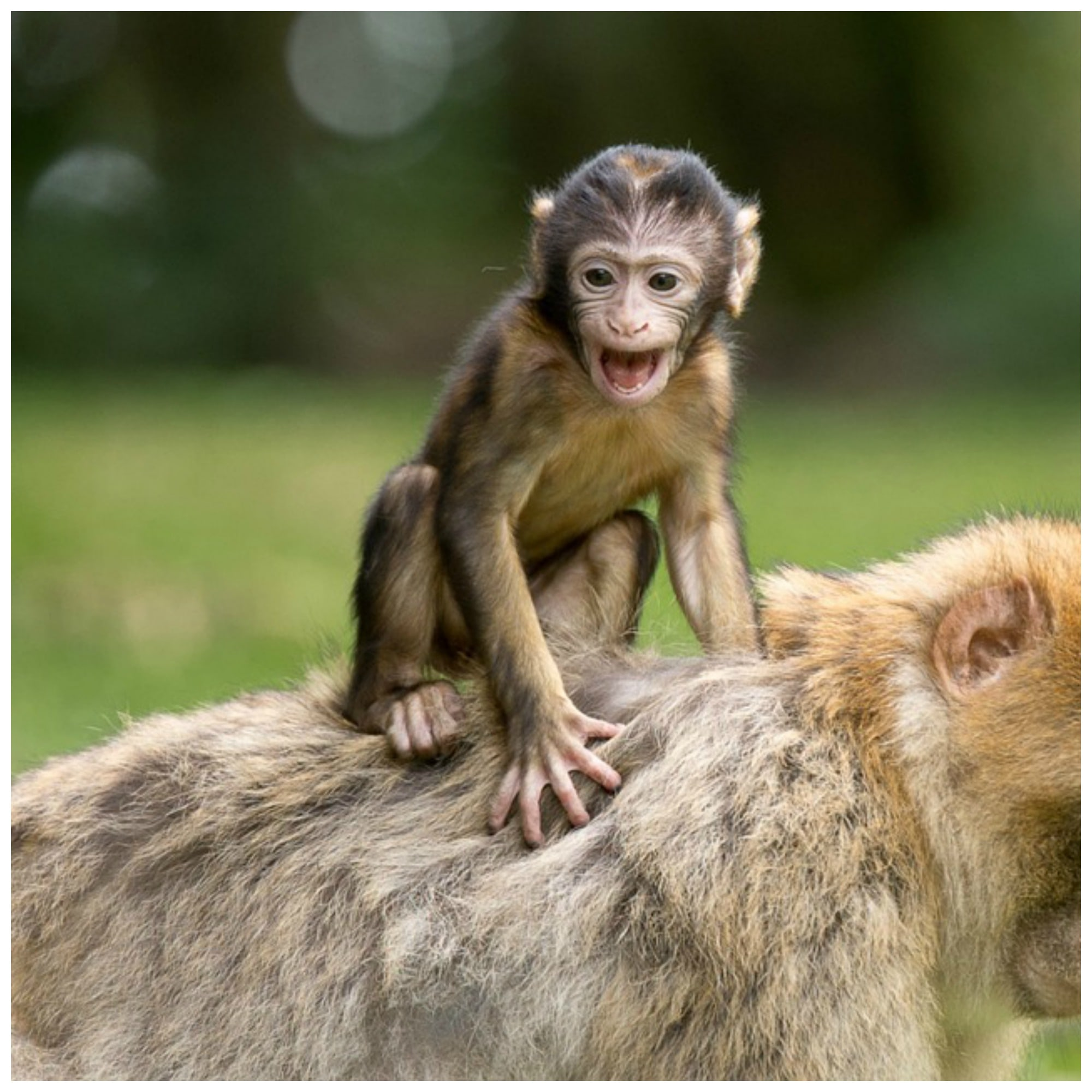 Research and Monkeys