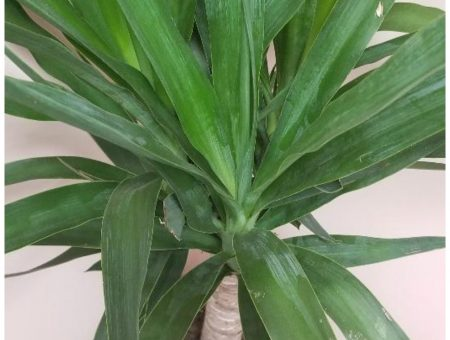 Do indoor plants have health benefits